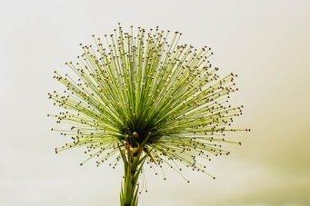 flower-2071522__340.jpg